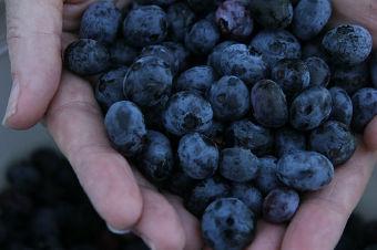 fructe-pentru-tuica